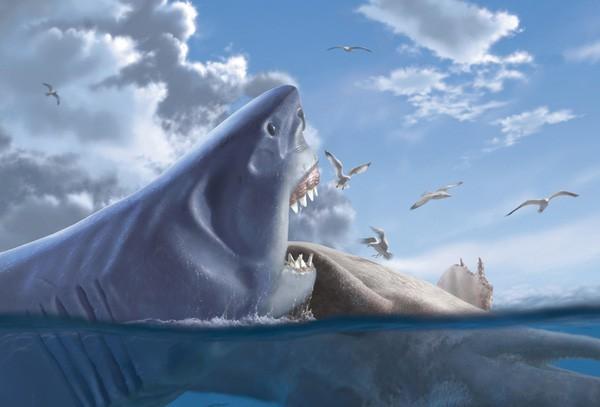 95% đại dương chưa được khai phá, vậy có khả năng nào Megalodon vẫn còn sống? - Ảnh 4.