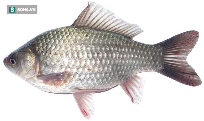 Cá diếc rất ngon và bổ dưỡng, nhưng 4 nhóm người này không nên ăn: Hãy xem có bạn không? - Ảnh 1.