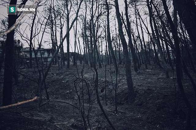 Vụ cháy khiến làng Mati trở thành tro bụi. Ảnh: Dodo