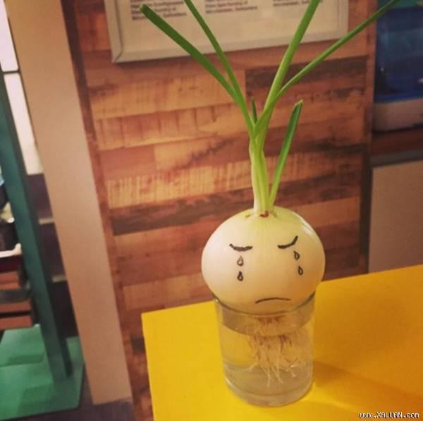 Đam mê bonsai nhưng kinh tế eo hẹp, cô nàng trồng củ khoai lang và đem lại kết quả bất ngờ - Ảnh 9.