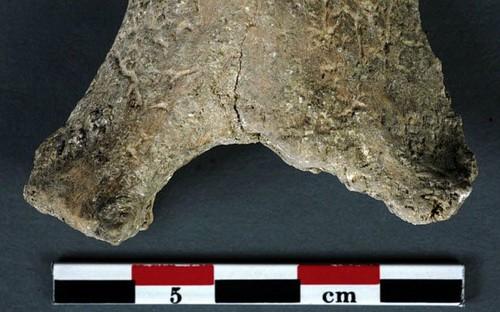 Những cách chữa bệnh khó tin từ thời đồ đá - Ảnh 1.