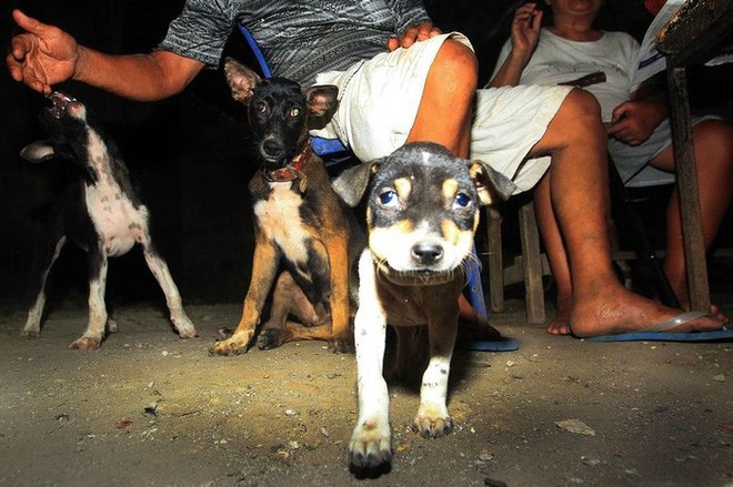 Thư cún con gửi quý ông bà đang ăn thịt chó: Chúng tôi không xin được hóa kiếp làm người - Ảnh 1.