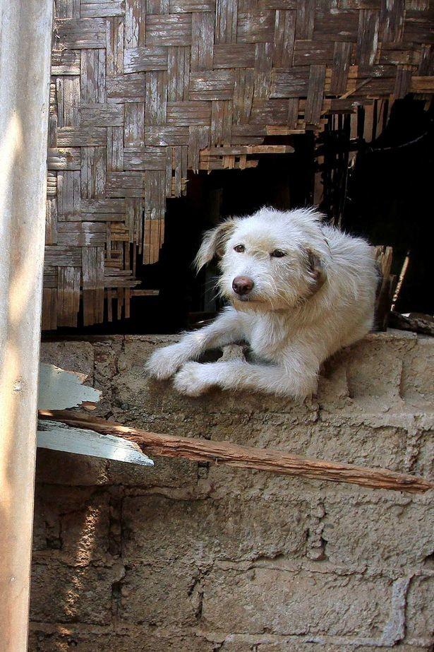 Thư cún con gửi quý ông bà đang ăn thịt chó: Chúng tôi không xin được hóa kiếp làm người - Ảnh 4.