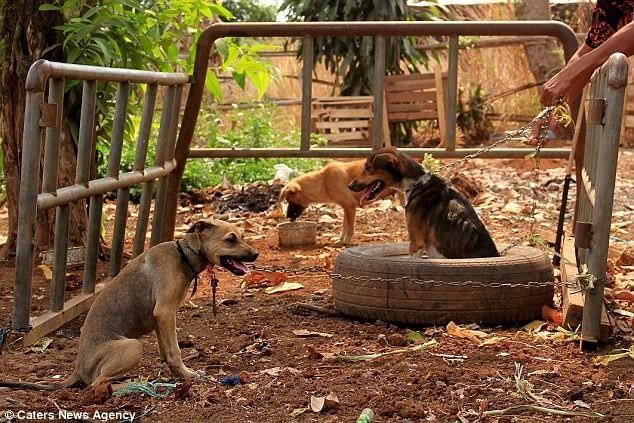 Thư cún con gửi quý ông bà đang ăn thịt chó: Chúng tôi không xin được hóa kiếp làm người - Ảnh 3.