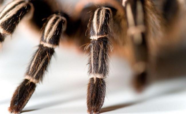 Viện bảo tàng bị trộm mất hơn 7.000 loài côn trùng và nhện kinh dị nhất, và lý do đằng sau thật bất ngờ - Ảnh 1.