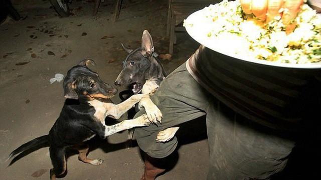 Thư cún con gửi quý ông bà đang ăn thịt chó: Chúng tôi không xin được hóa kiếp làm người - Ảnh 6.