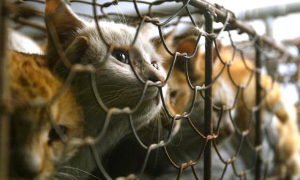 Ăn thịt chó, mèo ở Đài Loan có thể bị phạt tiền lên tới 186 triệu đồng. (Ảnh: AP)