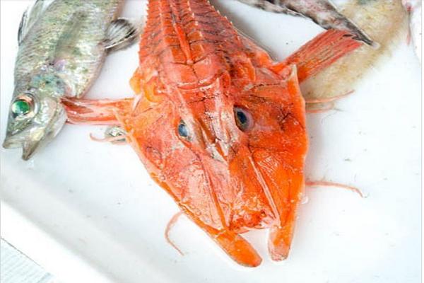 Kỳ dị 12 loài giáp xác mới được phát hiện dưới đáy biển sâu - Ảnh 5.