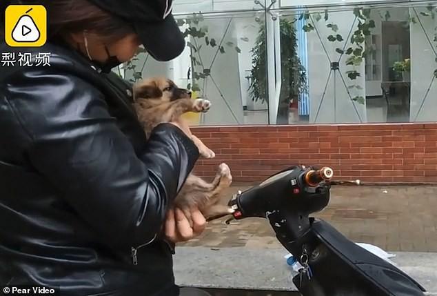 Khoảnh khắc cảm động: Chó mẹ hôn tạm biệt đứa con sắp được nhận nuôi khiến cư dân mạng không khỏi ngậm ngùi - Ảnh 6.