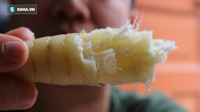 Bột của một loại củ dân dã ở Việt Nam đang được khuyên dùng cho căn bệnh toàn cầu mới - Ảnh 1.