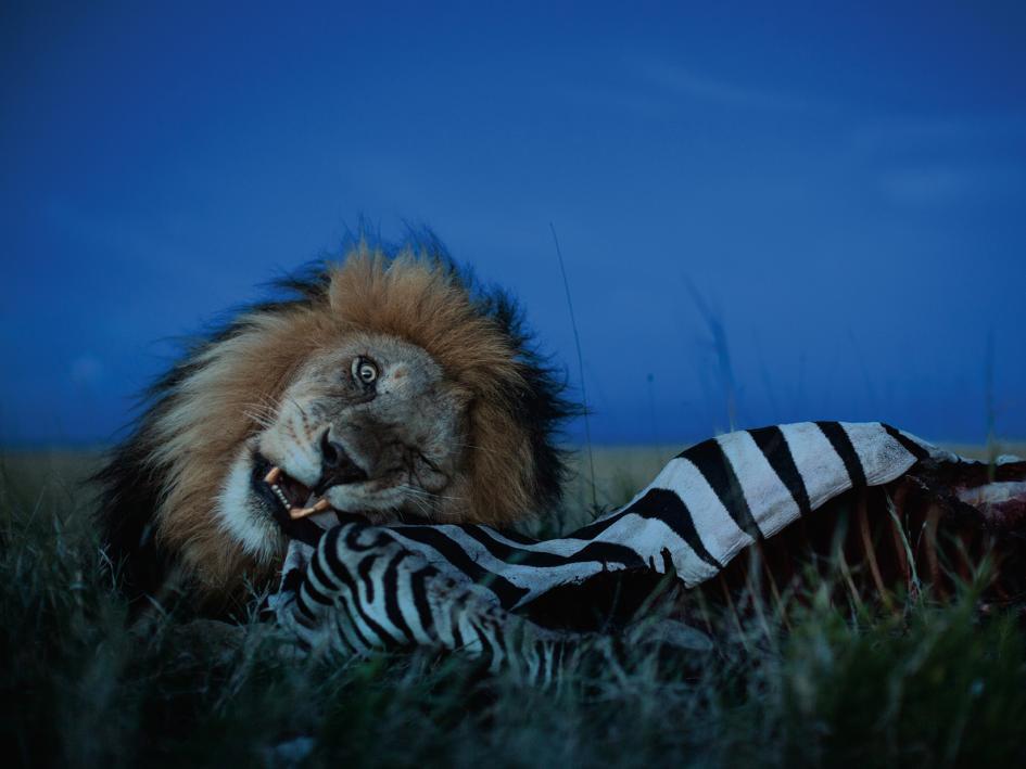 Sư tử diệt sư tử: Cuộc ám sát 3 cắn 1 và sự hồi sinh nghẹt thở của nhà vua - Ảnh 20.