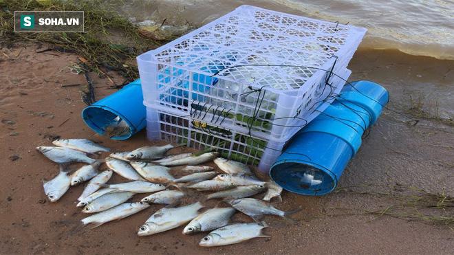 Để khay nhựa dưới gầm cầu, sau một đêm, chàng thanh niên thu được mẻ cá to - Ảnh 8.