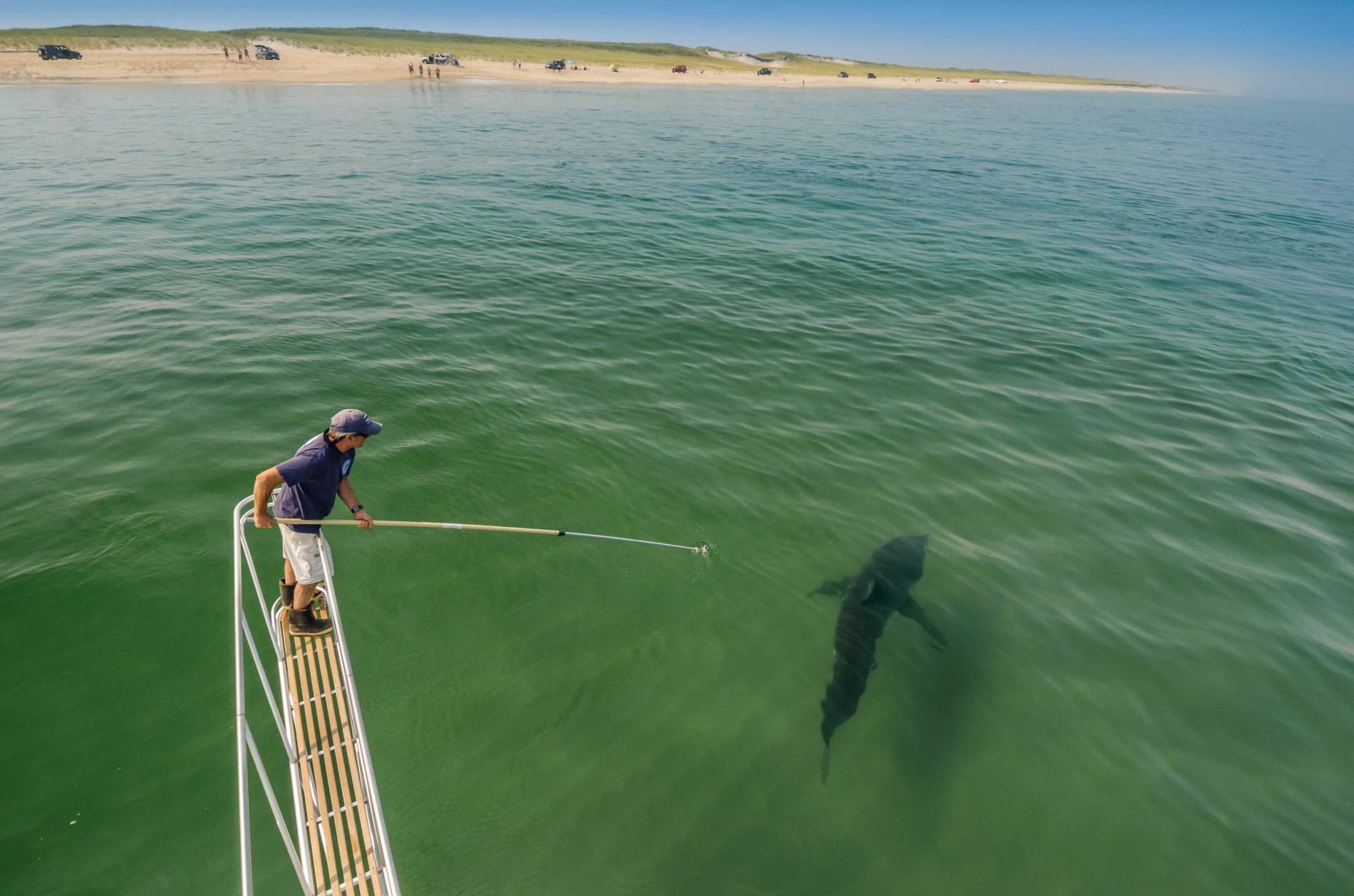 Con cá rất đẹp đột ngột mất tích và cuộc săn tìm đàn cá mập trắng lớn nhất thế giới - Ảnh 7.