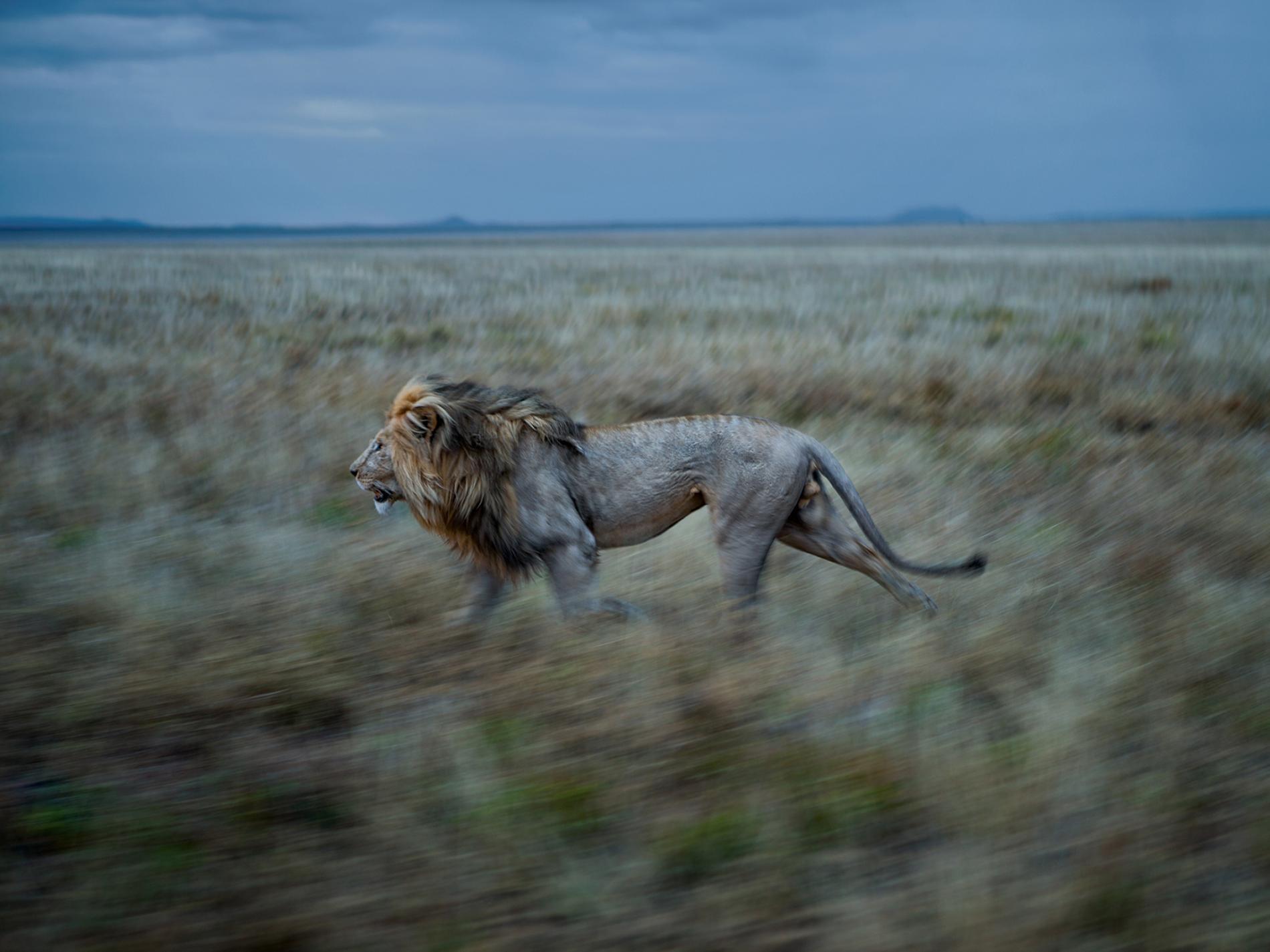 Sư tử diệt sư tử: Cuộc ám sát 3 cắn 1 và sự hồi sinh nghẹt thở của nhà vua - Ảnh 21.