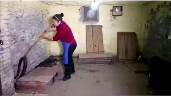 VIDEO cận cảnh cách chăm sóc 1.000 con rắn mỗi ngày của 'nữ hoàng rắn hổ mang' - Ảnh 1.