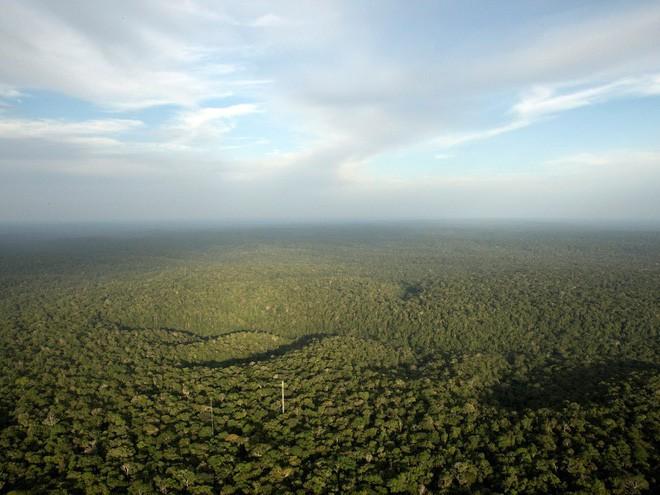 Rừng Amazon có tổng diện tích gấp đôi Ấn Độ. Trong ảnh: Cái nhìn bao quát Amazon từ Tháp quan sát ở Sao Sebastiao do Uatuma, Brazil