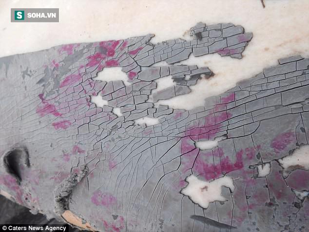 Nhiều con cá heo dạt vào bờ trong tình trạng có nhiều vết thượng nặng ở da. Ảnh: Caters News Agency