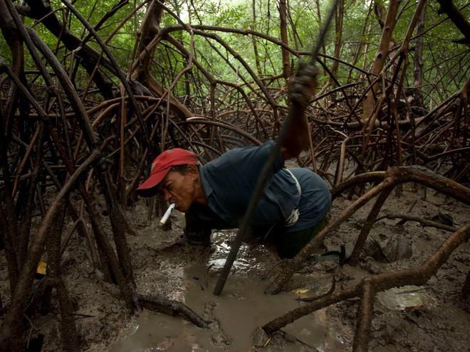 Một ngư dân đang bắt cua tại vùng nước lợ gần bang Para (Brazil), đây là nơi nước ngọt từ sông Amazon giao với nước từ Đại Tây Dương.