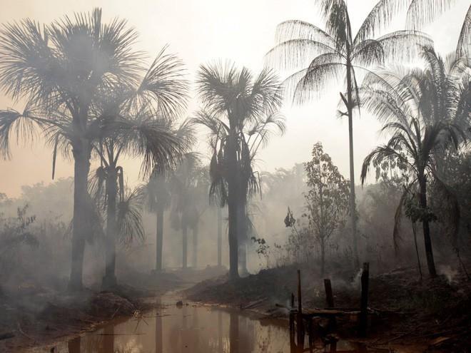 Đáng buồn thay, rừng Amazon bị ảnh hưởng rất nhiều bởi các hoạt động của con người trong những năm qua. Trong 50 năm trở lại, 17% diện tích rừng đã biến mất. Trong ảnh: Đám cháy trong rừng Amazon gần thành phố Madaquiri của Brazil.