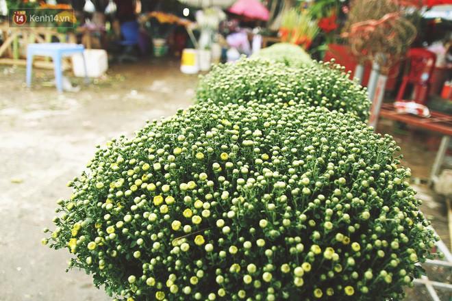 Người dân làng đào Nhật Tân: Từ giờ đến Tết mà rét thế này thì đào không nở hoa kịp mất! - Ảnh 16.