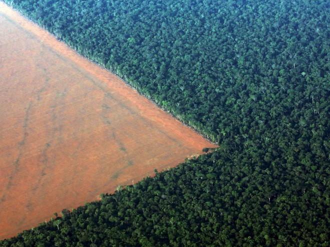 Một phần rừng Amazon thuộc bang Mato Gross (Brazil) bị phá để làm đất trồng đậu nành.