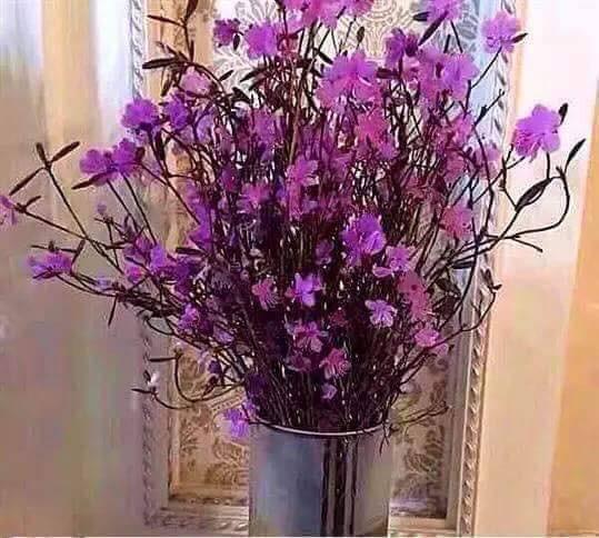 Bà nội trợ Hà thành 'phát sốt' với hoa 'đỗ quyên ngủ đông' như bó củi khô giá 200 nghìn đồng  - Ảnh 3.