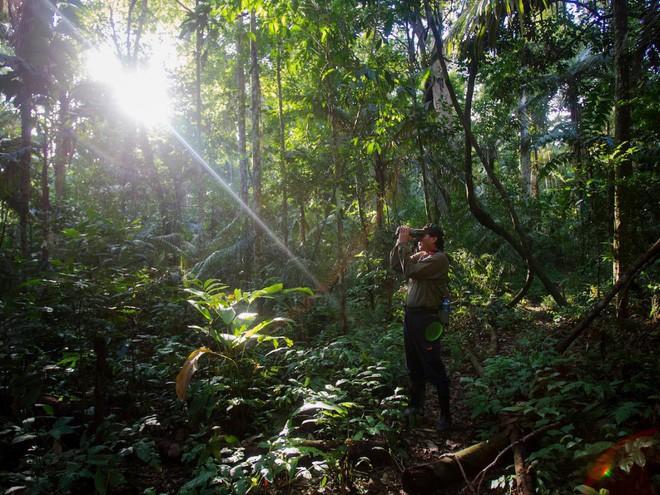 Và còn rất nhiều tổ chức, cá nhân đang ra sức bảo vệ lá phổi xanh của Trái Đất, giúp kỳ quan này vẫn mãi mãi tồn tại. Trong ảnh: Một hướng dẫn viên đang dùng ống nhòm quan sát khỉ trong công viên quốc gia Manu ở Madre De Dios (Peru).