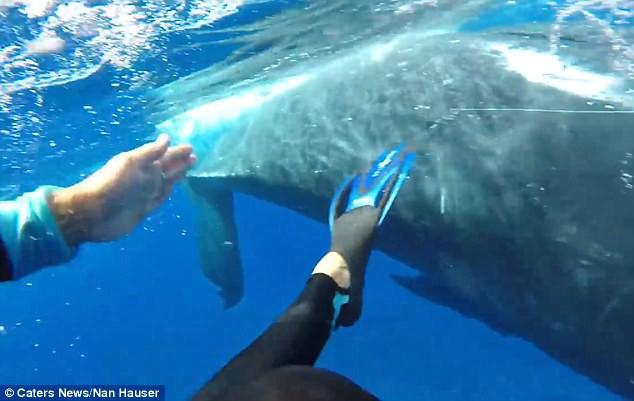 Thấy cá mập săn mồi lởn vởn, cá voi khổng lồ nặng 22 tấn lấy thân mình che chắn cho đội thợ lặn khỏi bị tấn công - Ảnh 4.