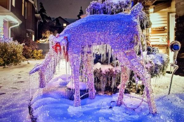Canada lạnh giá tới mức bát mỳ đóng băng, chim cánh cụt cũng 'chào thua' - Ảnh 4.