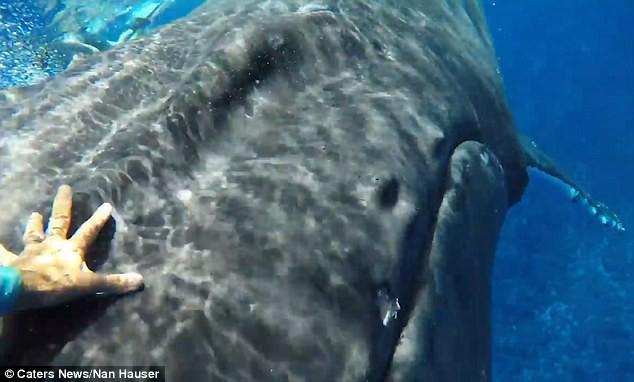 Thấy cá mập săn mồi lởn vởn, cá voi khổng lồ nặng 22 tấn lấy thân mình che chắn cho đội thợ lặn khỏi bị tấn công - Ảnh 5.