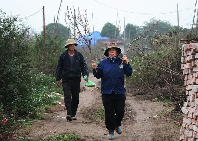 Đào nở sai thời điểm, rớt giá chỉ còn 50.000 đồng/cành, nông dân Nhật Tân như ngồi trên đống lửa  - Ảnh 6.