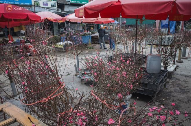 Người dân làng đào Nhật Tân: Từ giờ đến Tết mà rét thế này thì đào không nở hoa kịp mất! - Ảnh 6.