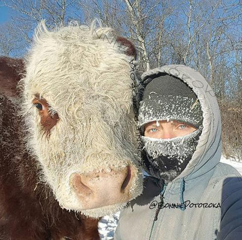 Canada lạnh giá tới mức bát mỳ đóng băng, chim cánh cụt cũng 'chào thua' - Ảnh 7.