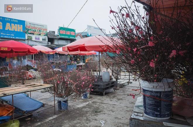 Người dân làng đào Nhật Tân: Từ giờ đến Tết mà rét thế này thì đào không nở hoa kịp mất! - Ảnh 8.