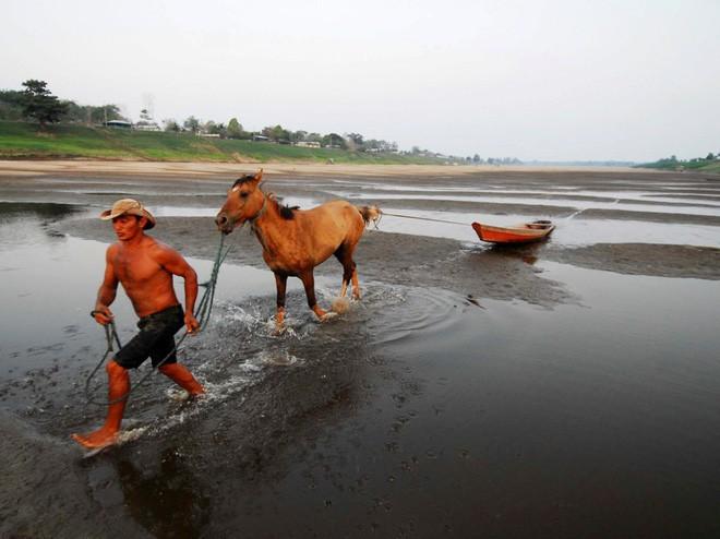 Cuộc sống của các bộ tộc tại Amazon phản ánh môi trường xung quanh họ. Trong ảnh: người đàn ông kéo thuyền qua bãi bồi của một phụ lưu sông Amazon trong trận hạn hán.