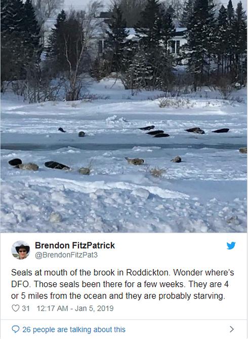 Dư luận Canada dấy lên nhiều mối lo ngại rằng những con hải cẩu có thể bị chết đói.