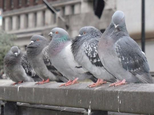 Chim bồ câu bậy trong bệnh viện, 2 bệnh nhân thiệt mạng - Ảnh 2.