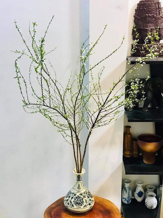Bạch tuyết mai - cây cảnh không thể thiếu mang sung túc vào nhà trong dịp Tết Kỷ Hợi 2019 - Ảnh 1.