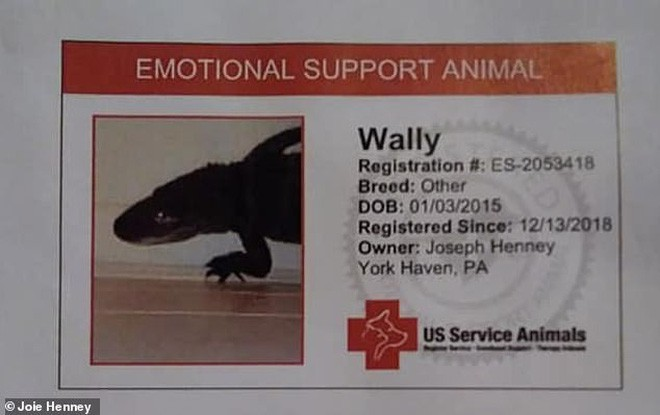 Gặp gỡ Wally: Chú cá sấu đáng yêu nhất quả đất, không cắn ai bao giờ lại còn thích được xoa đầu như chó - Ảnh 3.