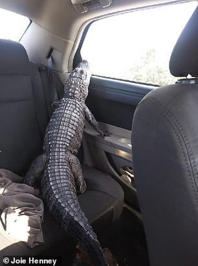 Gặp gỡ Wally: Chú cá sấu đáng yêu nhất quả đất, không cắn ai bao giờ lại còn thích được xoa đầu như chó - Ảnh 5.