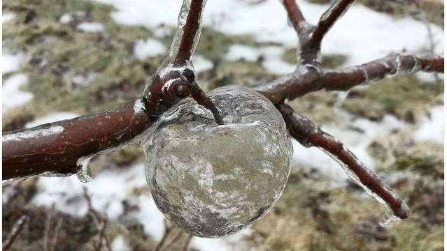 Tình trạng lạnh giá tại Mỹ tạo ra những quả táo ma bằng đá vô cùng độc đáo - Ảnh 1.