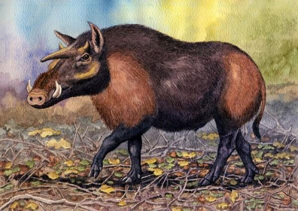 Kubanochoerus gigas - hay lợn kỳ lân