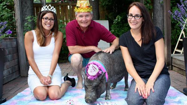 Cô lợn Ernestine cùng gia đình Dan King