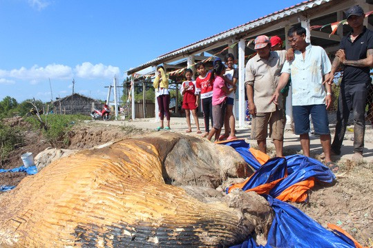 Dân kéo đến xem xác cá voi khủng trôi vào bờ, đang phân hủy nặng  - Ảnh 3.