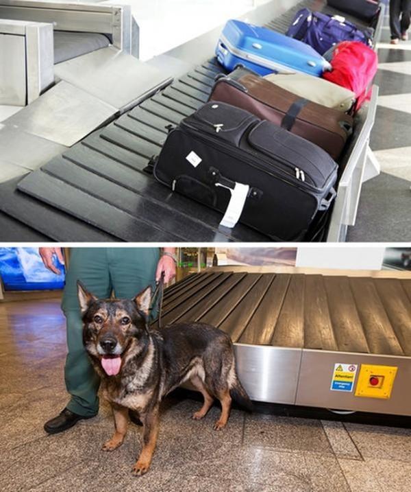 8 sự thật nhân viên sân bay biết rõ về bạn nhưng sẽ không bao giờ tiết lộ - Ảnh 4.