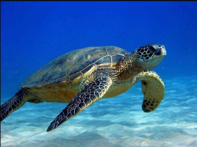 Chuyên gia: 3 đặc điểm giúp rùa trở thành loài sống thọ nhất thế giới mà con người nên học - ảnh 2