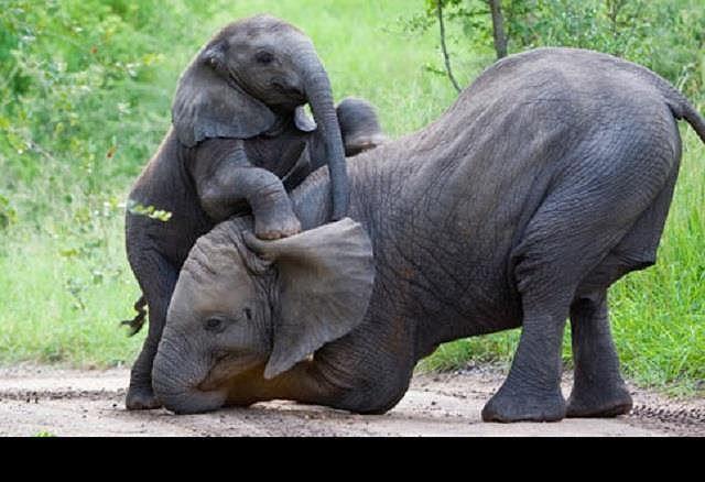 Top 10 loài động vật sống lâu nhất thế giới tự nhiên - Ảnh 5.