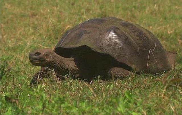 Top 10 loài động vật sống lâu nhất thế giới tự nhiên - Ảnh 6.