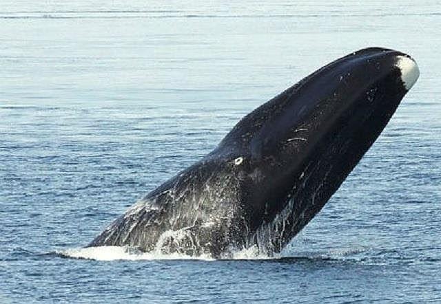Top 10 loài động vật sống lâu nhất thế giới tự nhiên - Ảnh 7.