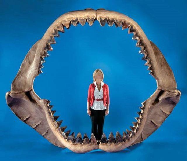 Bí ẩn loài cá mập khổng lồ thời tiền sử - Ảnh 1.